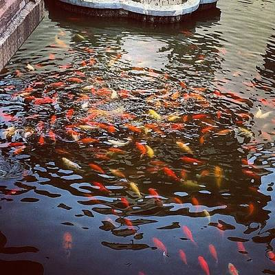 Koi Fish Photograph - #fish #koi #shanghai by Graham Clayton