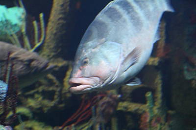 Baltimore Photograph - Fish - National Aquarium In Baltimore Md - 1212106 by DC Photographer