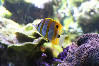 Fish - National Aquarium In Baltimore Md - 1212111 Art Print by DC Photographer