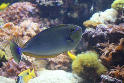 Seaport Photograph - Fish - National Aquarium In Baltimore Md - 1212121 by DC Photographer