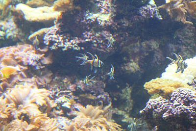 Tourist Photograph - Fish - National Aquarium In Baltimore Md - 1212123 by DC Photographer