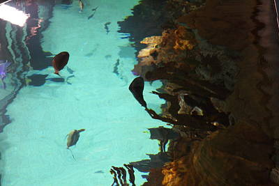 Baltimore Photograph - Fish - National Aquarium In Baltimore Md - 1212127 by DC Photographer