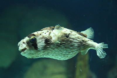 Attraction Photograph - Fish - National Aquarium In Baltimore Md - 1212138 by DC Photographer