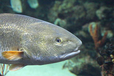 Seaport Photograph - Fish - National Aquarium In Baltimore Md - 121214 by DC Photographer