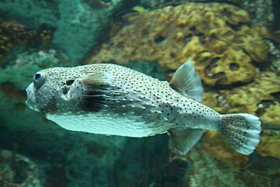 Fish - National Aquarium In Baltimore Md - 1212143 Art Print