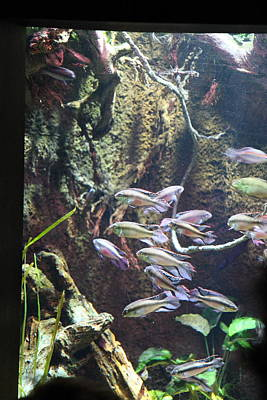 Maryland Photograph - Fish - National Aquarium In Baltimore Md - 121222 by DC Photographer