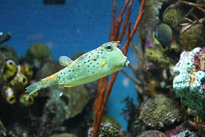 Fish - National Aquarium In Baltimore Md - 121233 Art Print