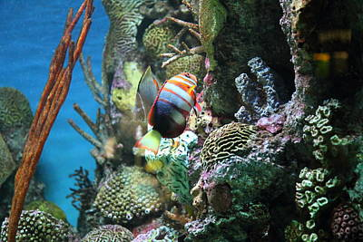 Sealife Photograph - Fish - National Aquarium In Baltimore Md - 121234 by DC Photographer