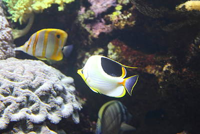 Fish - National Aquarium In Baltimore Md - 121239 Art Print by DC Photographer