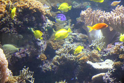 Harbor Photograph - Fish - National Aquarium In Baltimore Md - 121246 by DC Photographer