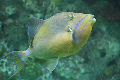 Baltimore Photograph - Fish - National Aquarium In Baltimore Md - 121258 by DC Photographer