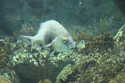 Sealife Photograph - Fish - National Aquarium In Baltimore Md - 121261 by DC Photographer