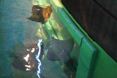 Fish - National Aquarium In Baltimore Md - 12127 Art Print