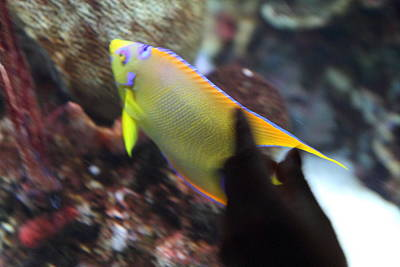 Fish - National Aquarium In Baltimore Md - 121272 Art Print by DC Photographer
