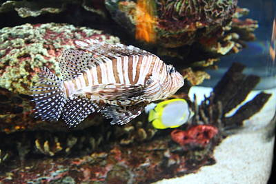 Fish - National Aquarium In Baltimore Md - 121274 Art Print by DC Photographer