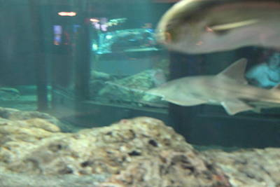 Fish - National Aquarium In Baltimore Md - 121285 Art Print by DC Photographer
