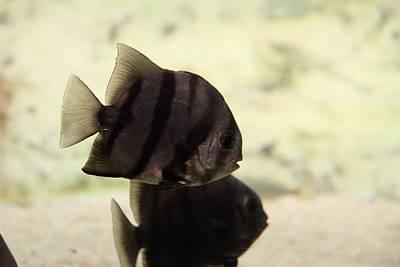 Aquarium Photograph - Fish - National Aquarium In Baltimore Md - 121288 by DC Photographer