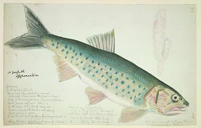 Fish Of The Family Cyprinidae Art Print