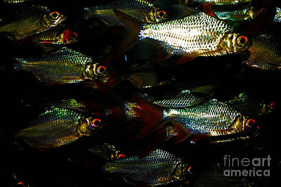 Photograph - Fish by Olga Hamilton
