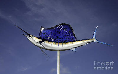 Photograph - Fish On A Stick by Glenn Gordon