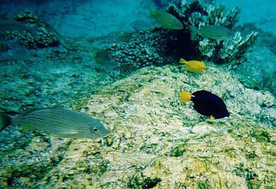 Photograph - Fish On The Reef by D Hackett