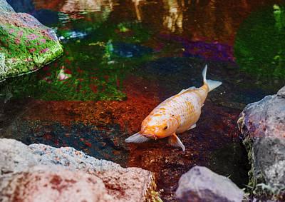 Digital Art - Fish Pond 2 by Susan Stone