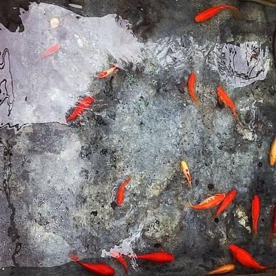 Koi Fish Photograph - Fishies by Judi FitzPatrick