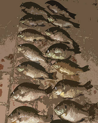 Photograph - Fish Pyramid  by Patricia Januszkiewicz