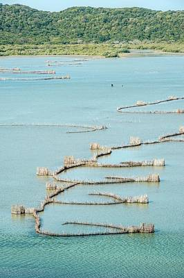 African Heritage Photograph - Fish Traps by Peter Chadwick