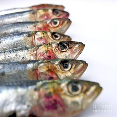 Food Photograph - Fishes by Bernard Jaubert
