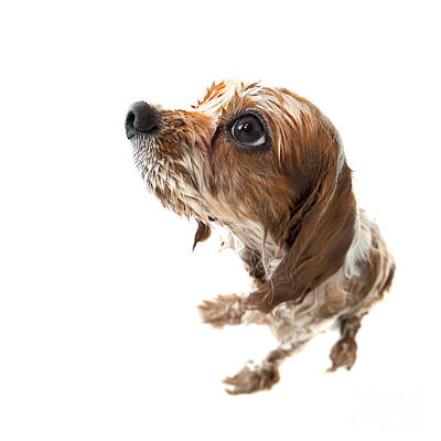 Adorable Photograph - Fisheye Wet Archie by Jane Rix