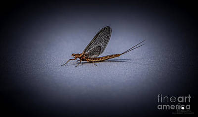 Photograph - Fishfly by Grace Grogan