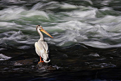 Fishing At Lehardy Rapids Art Print