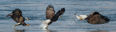 Eagle Photograph - Fishing Eagle Style by Angie Vogel