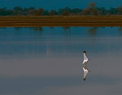 Photograph - Fishing Gull by Robert Woodward
