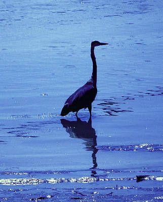 Photograph - Fishing Heron 2 by Laurie Tsemak