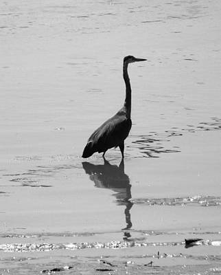 Photograph - Fishing Heron 3 by Laurie Tsemak