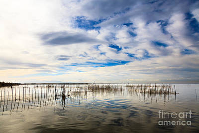 Photograph - Fishing Nets Amongst Reeds On Lake Albufera by Peter Noyce