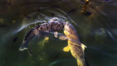 Photograph - Fishy Kisses by Linda Tiepelman