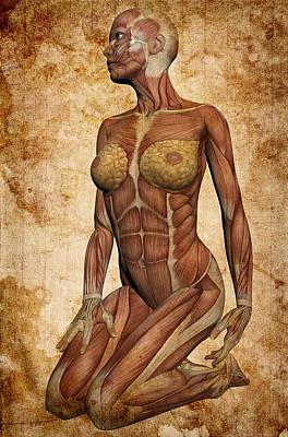 Female Body Digital Art - Fit Female Revealed by Daniel Hagerman