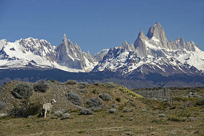 Photograph - Fitz Roy Range In Springtime 2 by Michele Burgess