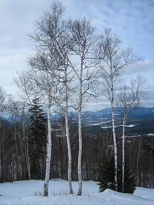 Five Birch Trees Art Print