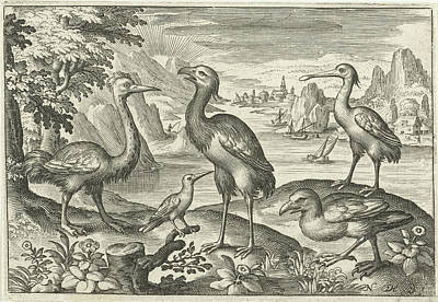 Spoonbill Drawing - Five Birds Including Spoonbill, Nicolaes De Bruyn by Nicolaes De Bruyn
