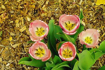 Lake Life - Five Bloomnig Smiles by Jeff Swan