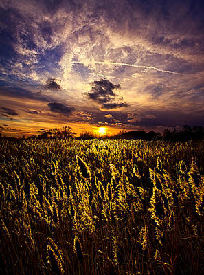 Five Degrees Print by Phil Koch