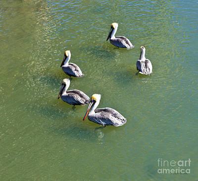 Photograph - Five Pelicans by Michelle Constantine