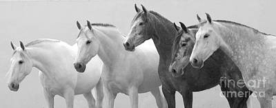 Grey Horse Photograph - Five Spanish Mares by Carol Walker