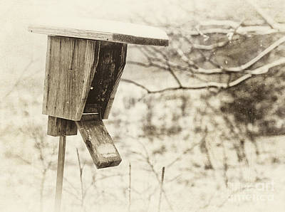 Photograph - Fixer Upper by Pam  Holdsworth