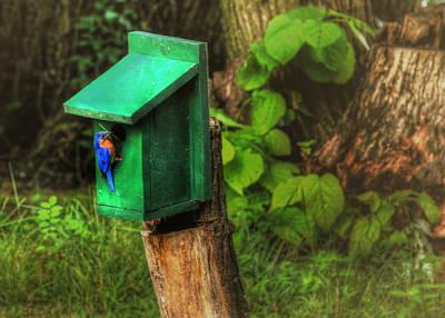 Bluebird Digital Art - Fixing The Nest by Sharon Batdorf