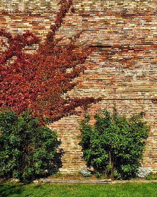 Photograph - Vine Caressing Brick Wall by Frank J Benz